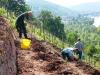spaetburgunder-fechser-werden-gepflanzt