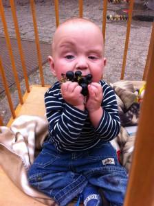 Unser Paul war letzte Woche noch ein wenig skeptisch mit der Reife der Beeren.
