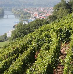 Blick aus dem Weinberg über Erlenbach und den Main